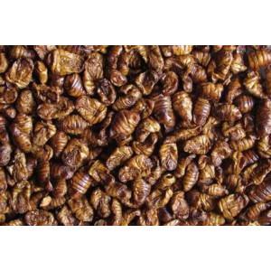 Seidenraupenpuppen 2400 ml