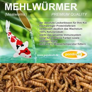 Mehlwürmer 5 kg
